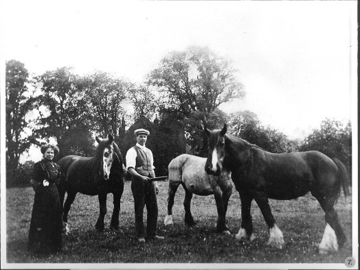 Horses at the Vicarage