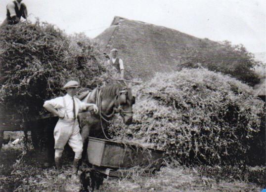 Farming 1920s