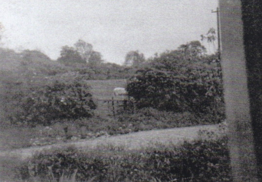 Waterloo Farm 1953