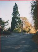 The Wellington Tree