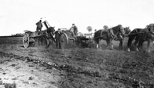 Chatteris invented Moulton potato harvester in use. Motorised 'horseless' model followed in 1903.