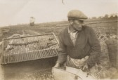 Employee of Mr. Charles Cole of Chatteris, using the machine he invented for washing carrots.