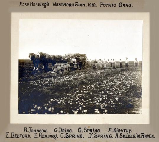 Ezra Heading's Westmoor Farm, Chatteris - Potato gang