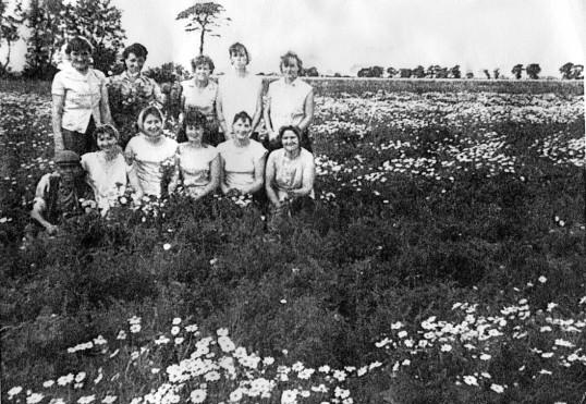 Carrot weeding in Chatteris fields