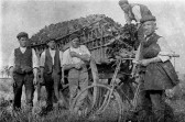 Chatteris farm workers. From C Pope collection found among post cards. Lad on left in other photo.
