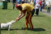 """""""Devilstick Peat"""" introducing his ferret to interested dog at Medieval Festival ,Furrowfiields, Chatteris."""