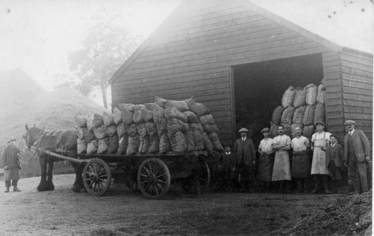 Farm workers outside the Rickwood Farm barn, Railway Lane.  Chatteris.  From the Alan Rickwood collection.