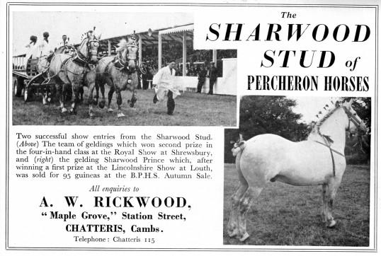 The Sharwood Stud advertisement