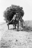 Preparing the Hay for transportation-Stuart Stacey Collection