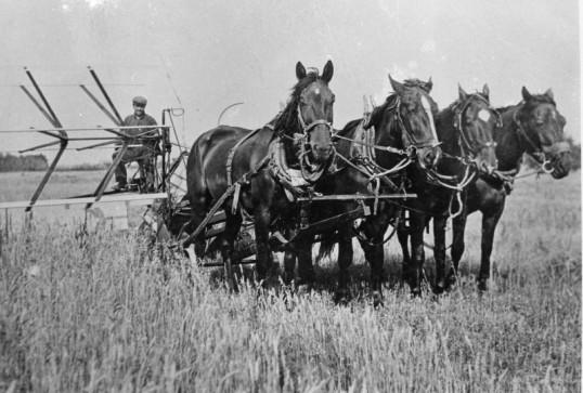 Team of four Horses pulling farm harvesting machine