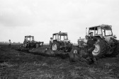 Bog Oak found on farmland 1971-Stuart Stacey Collection
