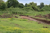 Archaeological survey trenches  off Wenny Road, Chatteris