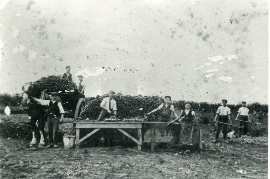 Farming on the land-Stuart Stacey Collection