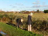 Tree planting along the Old Railway Line Chatteris
