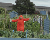 Allotments Open Afternoon,Honeysome Road, Chatteris (1)