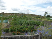 Allotment Open Afternoon, Honeysome Road, Chatteris (2)