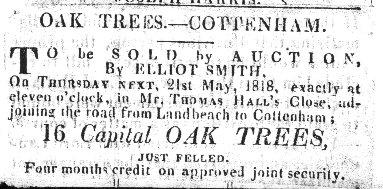 Sale of 16 Capital Oak Trees, Cottenham