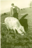 1948.  Mr John Lucas with his pig Jill in Coveney.