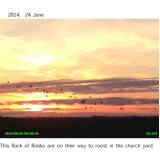 2014. Rooks at sunset.  24th June