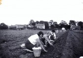 Rural Cultivated