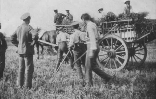 Soldiers helping with the harvest
