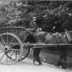 H Thulborn's horse and cart