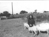 Great Abington - Land Settlement Association. Alison Frampton with pigs on the family holding at 12 Chalky Road.