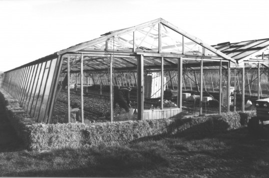 Great Abington - Land Settlement Association. Glasshouse on the Tredget's holding at 40 South Road.