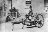 Linton - Water cart pulled by a rather over-worked donkey, outside Bull House.  Streets not tarred until 1911.