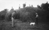 Haymaking on Rectory Farm