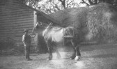Cart horse and horsekeeper