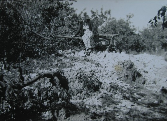 Florence Hart, Roger Hart's grandmother looking at an unexploded bomb crater in the grounds of Moorlands, Meldreth Road, Shepreth, during WW2.