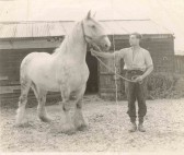 """Dennis Pepper and """"Samson"""", pictured at Brewery Farm, Brewery Lane, Meldreth."""