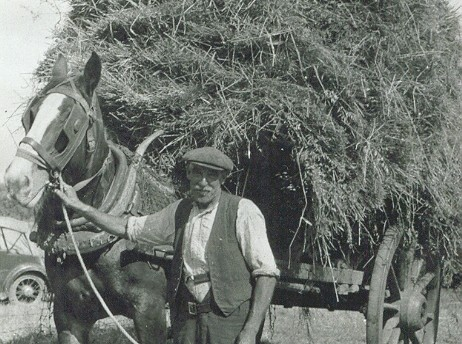 Henry (Ted) Slough with horse and cart (Mepal)