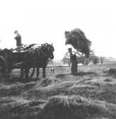 Hay Making on Manor Farm, Orwell.