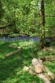 Papworth Woods