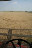 Harvesting wheat in Pymoor. A view from the cab of cab of a Combine Harvester driven by Dale Parson.