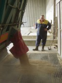 Dale Parson from Laurel Farm, Pymoor, supervising the off loading of grain that he has taken to the mill at Stoke Ferry 2006.