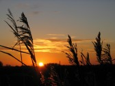 A glorious sunset over the Fens in Pymoor, 2007.