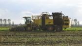 Harvesting the Sugar Beet at Oxlode Farm in Pymoor, 2007.