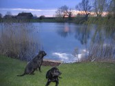 Cynthia Parson's dogs, Sky and Duke, enjoy the sunset at Oxlode Lakes, Pymoor, 2007.
