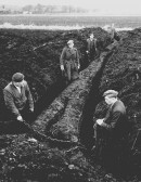 The discovery of a huge bog oak in Pymoor.. Bog Oak discovered in Pymoor in the early 1960's