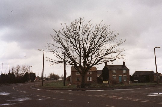 The last pictures of the old Conker Tree on Pymoor Hill. It was cut down the following day.