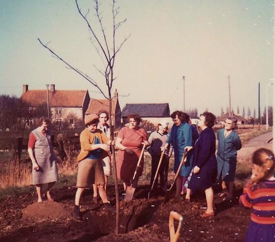 Pymoor WI planting a tree on Pymoor Hill, 1970.
