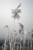 On this day there was a severe frost in Pymoor and the fog lasted all day, 2008