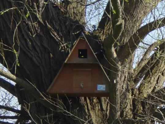 An Owl Nesting Box in Pymoor, 2007.