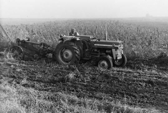 Working in the fields in Main Drove, Pymoor, circa 1965.