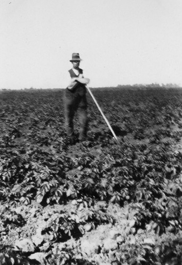 Clem Graham, working in the fields, in Main Drove, Pymoor.