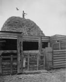 On top of a haystack, in Main Drove, Pymoor.