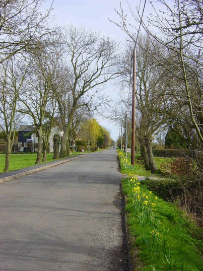 Pymoor Lane, Pymoor, looking East. Spring has arrived and the daffodills are flowering.